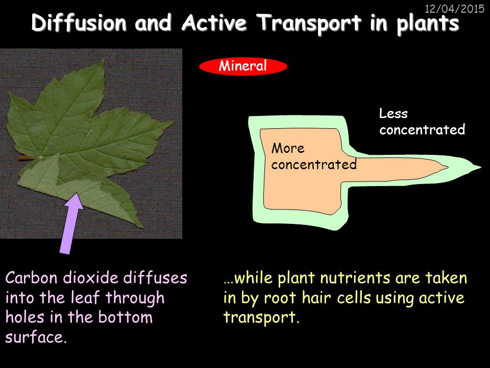 Diffusion and Active Transport in plants
