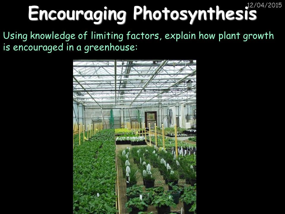 Encouraging Photosynthesis