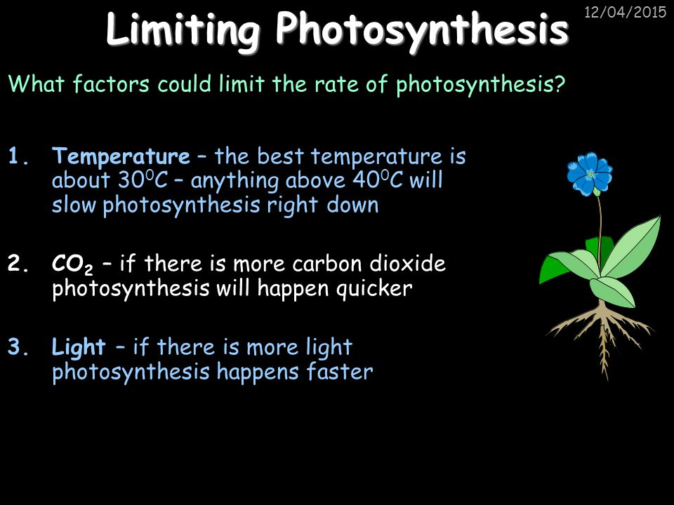 Limiting Photosynthesis