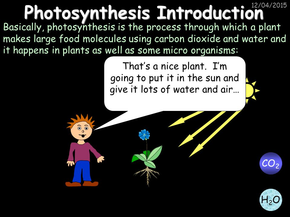 Photosynthesis Introduction