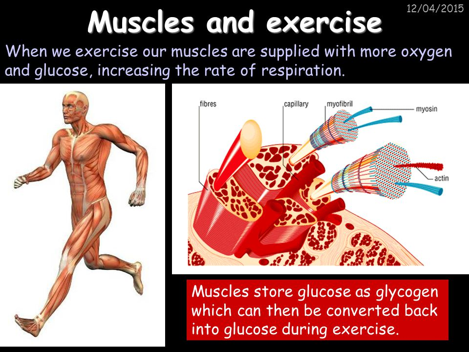 Muscles and exercise 10/04/2017. When we exercise our muscles are supplied with more oxygen and glucose, increasing the rate of respiration.