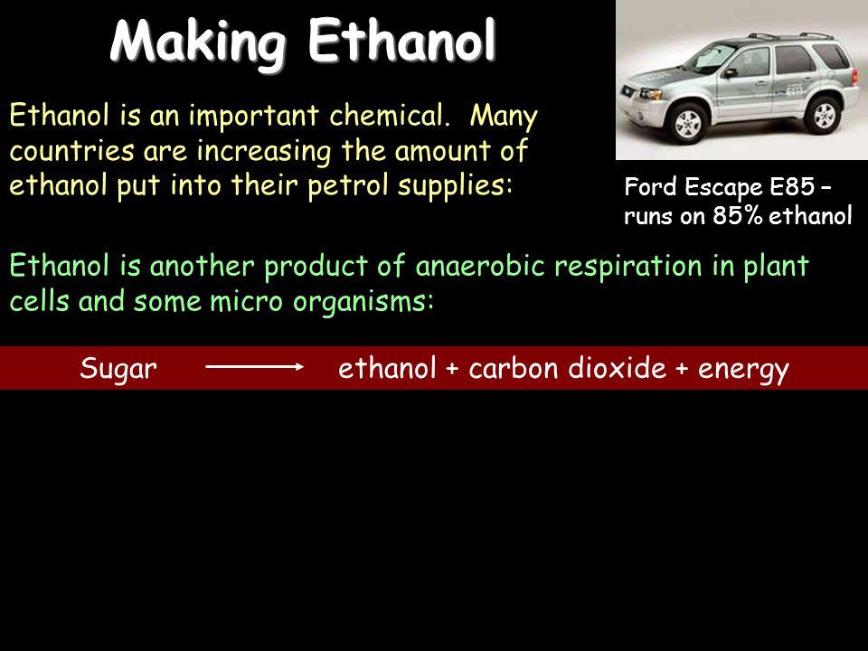 Sugar ethanol + carbon dioxide + energy