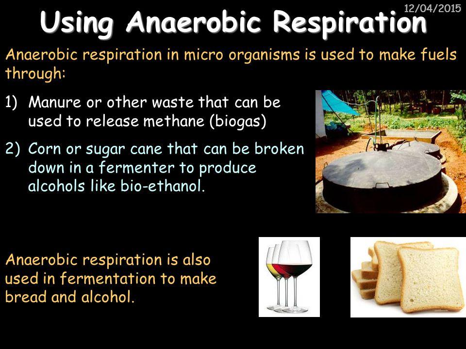Using Anaerobic Respiration