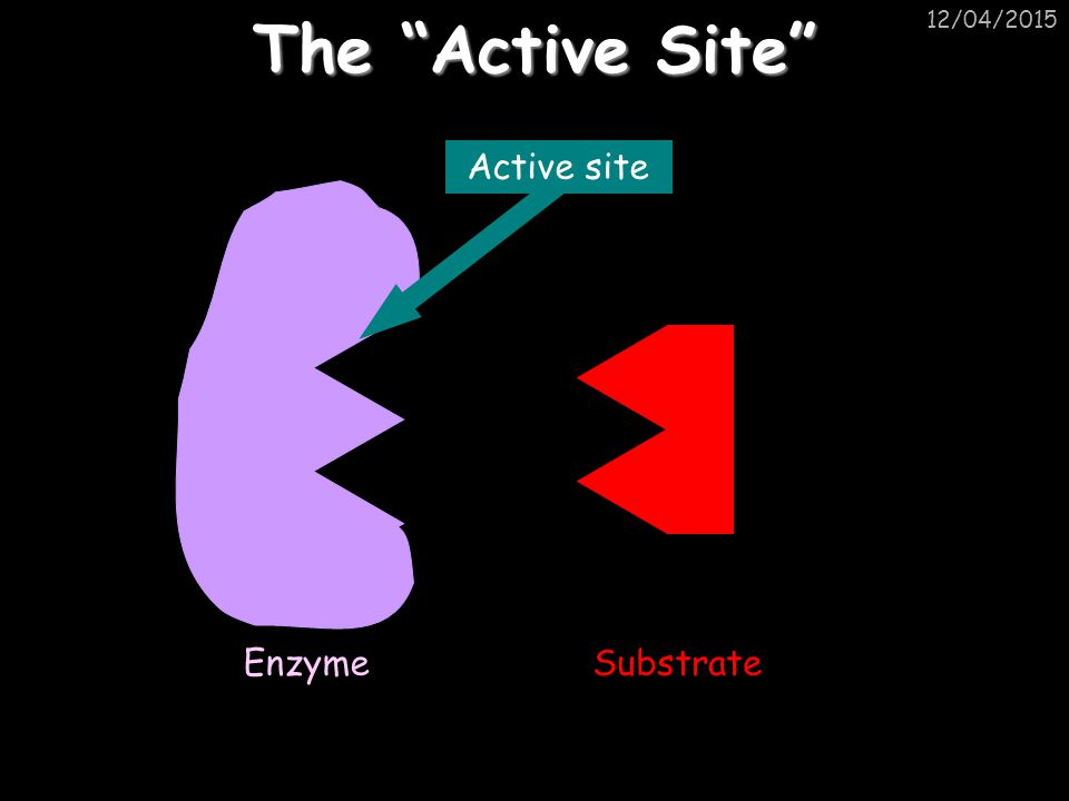 The Active Site 10/04/2017 Active site Enzyme Substrate