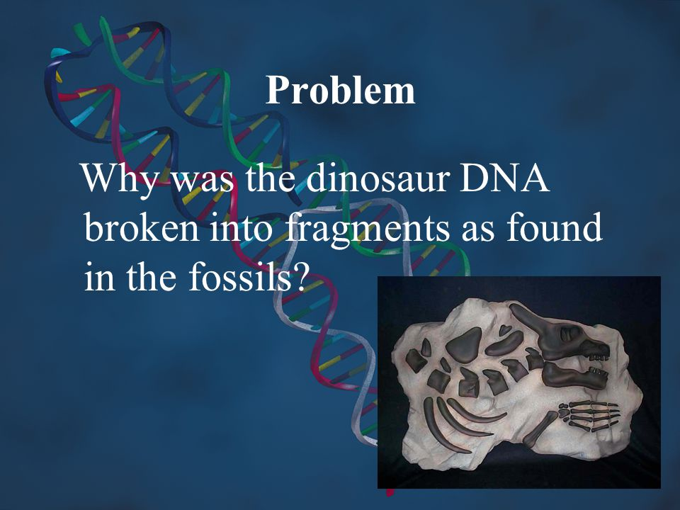 Problem Why was the dinosaur DNA broken into fragments as found in the fossils