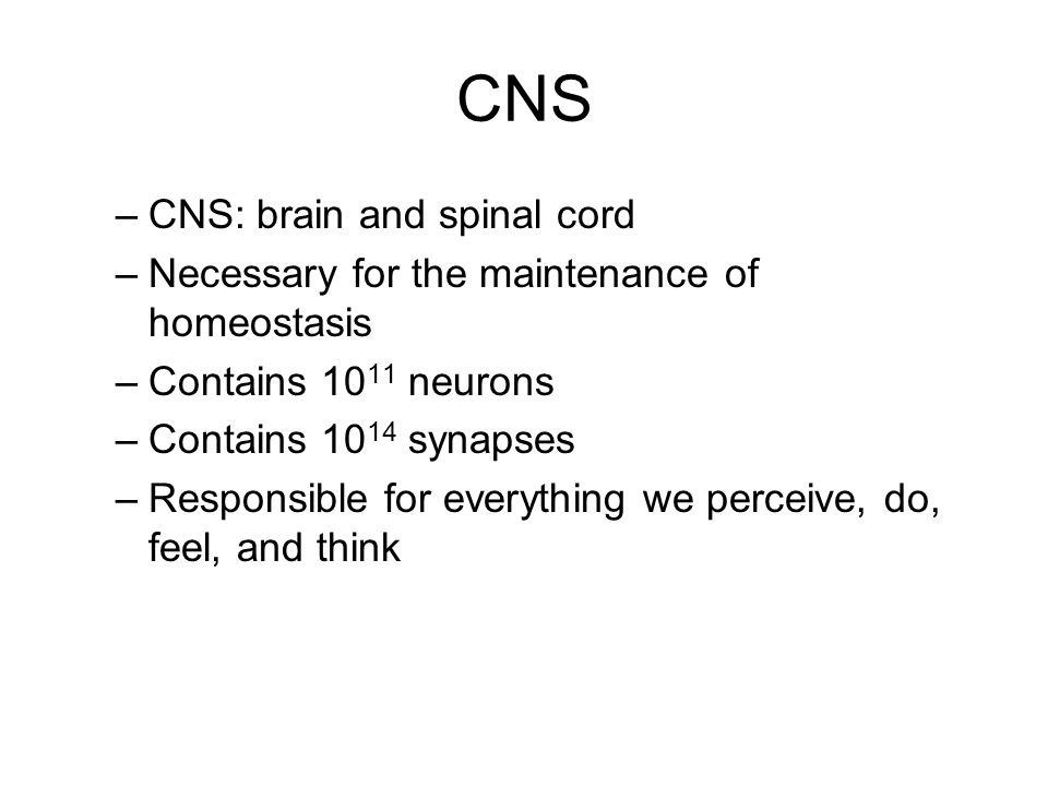 CNS CNS: brain and spinal cord
