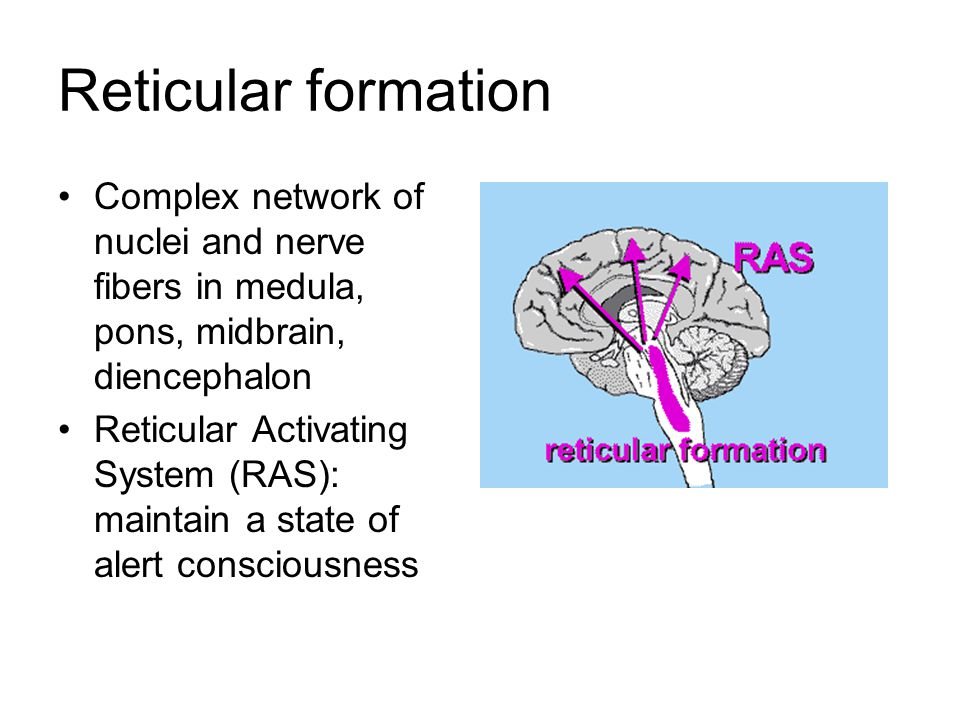 Reticular formation Complex network of nuclei and nerve fibers in medula, pons, midbrain, diencephalon.