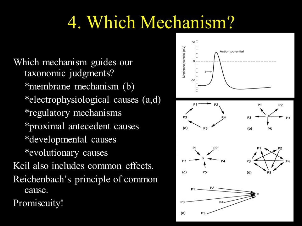 4. Which Mechanism Which mechanism guides our taxonomic judgments