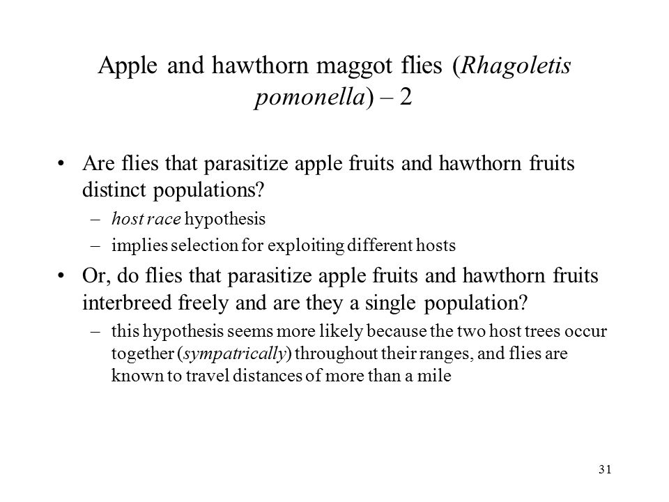 Apple and hawthorn maggot flies (Rhagoletis pomonella) – 2