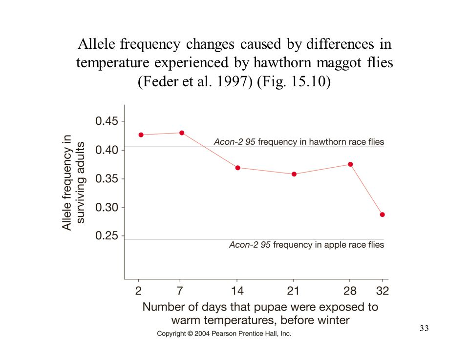 Allele frequency changes caused by differences in temperature experienced by hawthorn maggot flies (Feder et al.