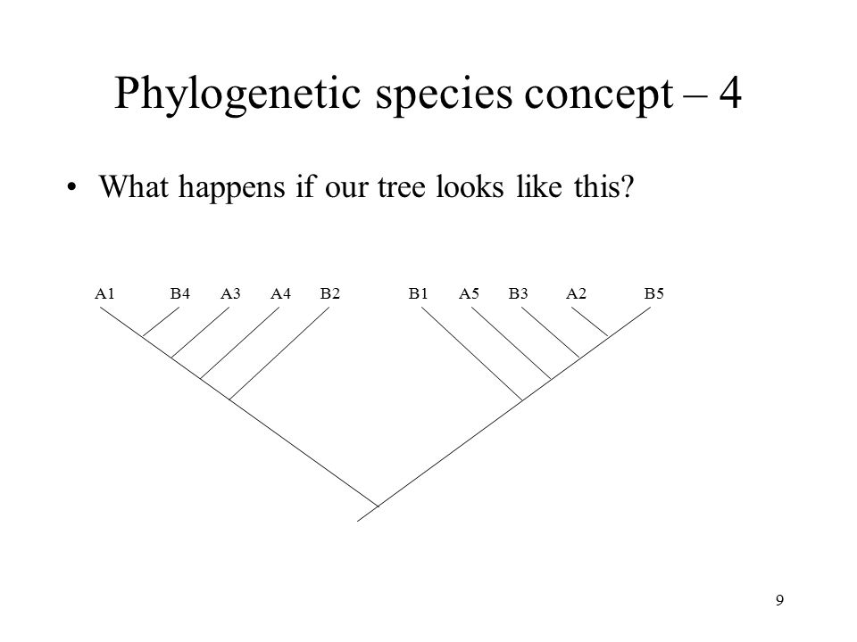 Phylogenetic species concept – 4