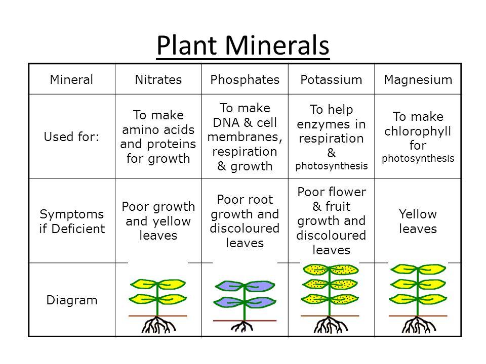 Plant Minerals Mineral Nitrates Phosphates Potassium Magnesium