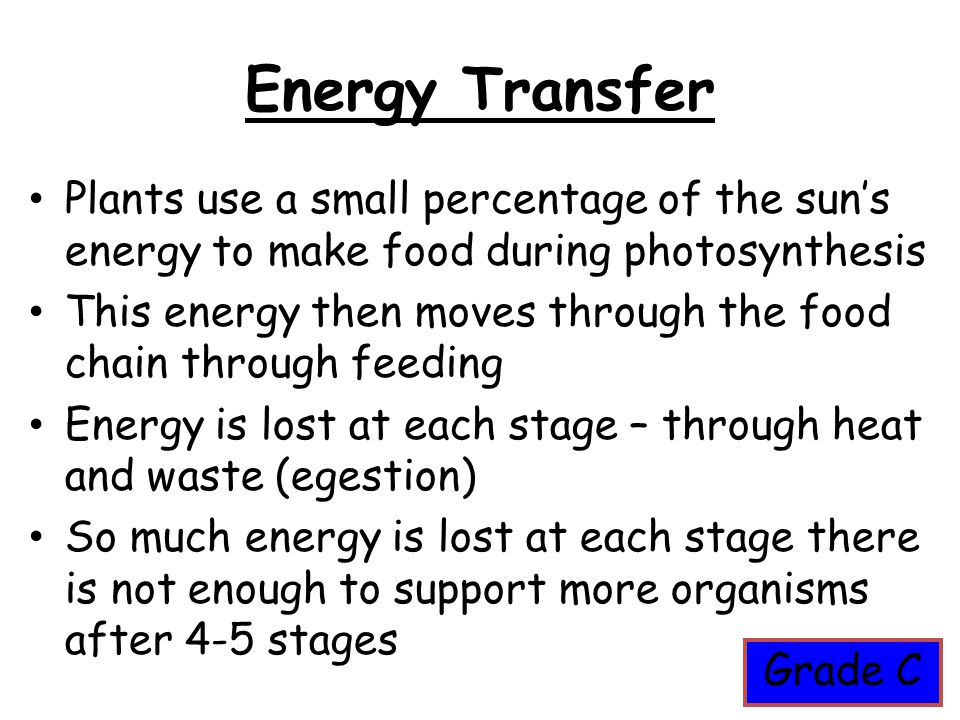 Energy Transfer Plants use a small percentage of the sun's energy to make food during photosynthesis.