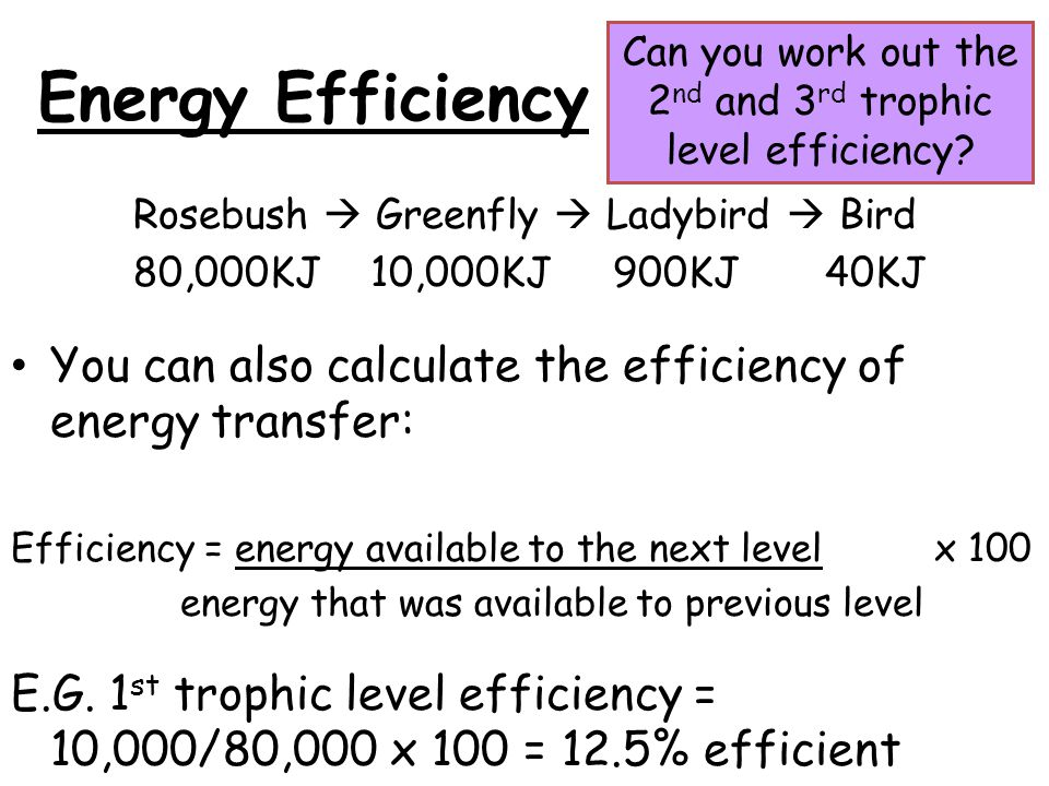 Can you work out the 2nd and 3rd trophic level efficiency