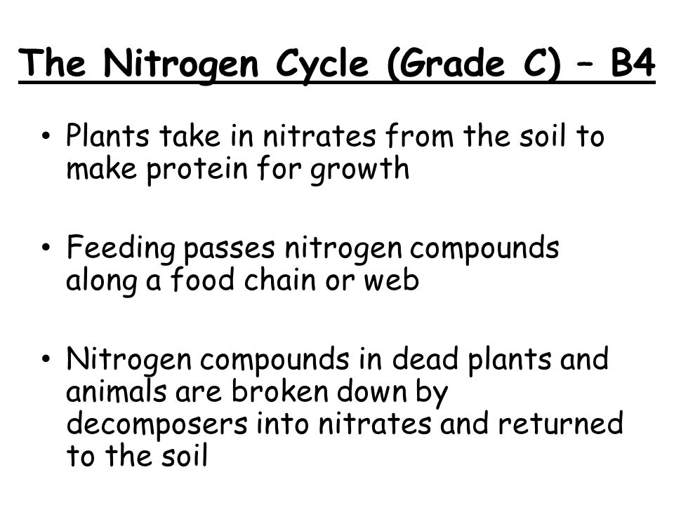 The Nitrogen Cycle (Grade C) – B4