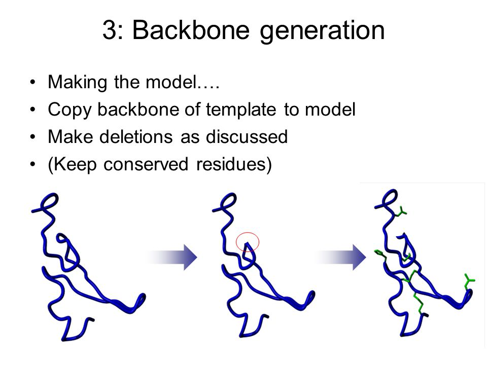 3: Backbone generation Making the model….