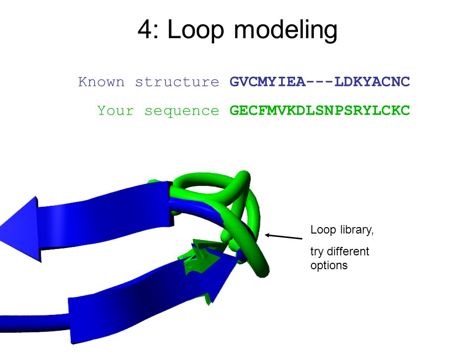 4: Loop modeling Known structure GVCMYIEA---LDKYACNC
