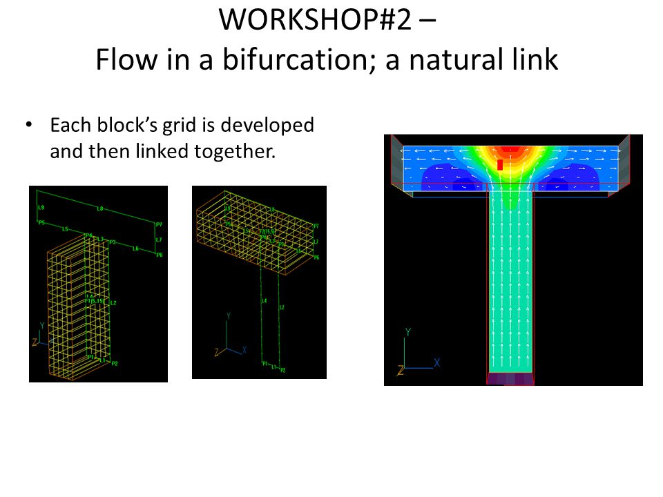 WORKSHOP#2 – Flow in a bifurcation; a natural link