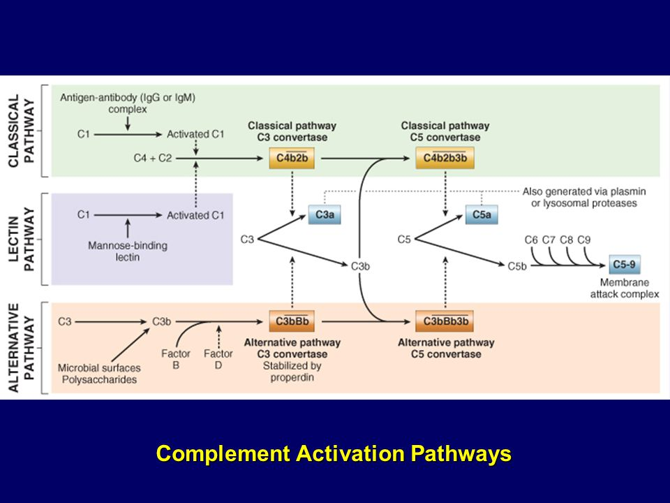 Complement Activation Pathways