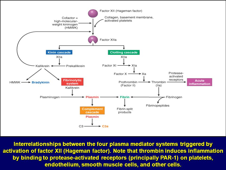 Interrelationships between the four plasma mediator systems triggered by activation of factor XII (Hageman factor).