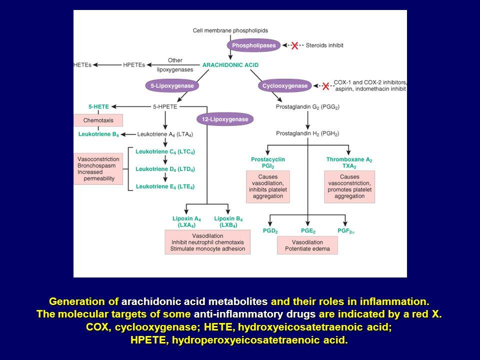 COX, cyclooxygenase; HETE, hydroxyeicosatetraenoic acid;