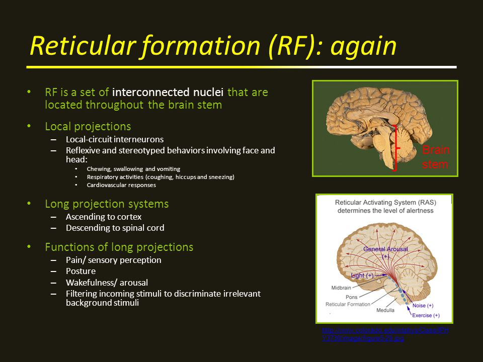 reticular formation function Moved permanently the document has moved here.