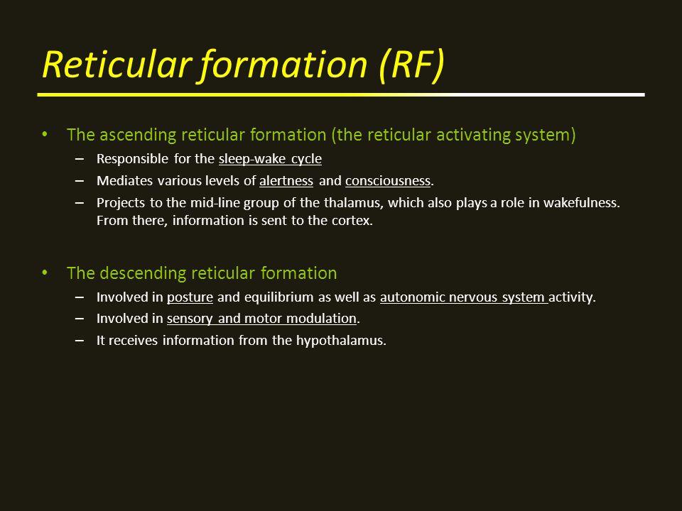 Reticular formation (RF)