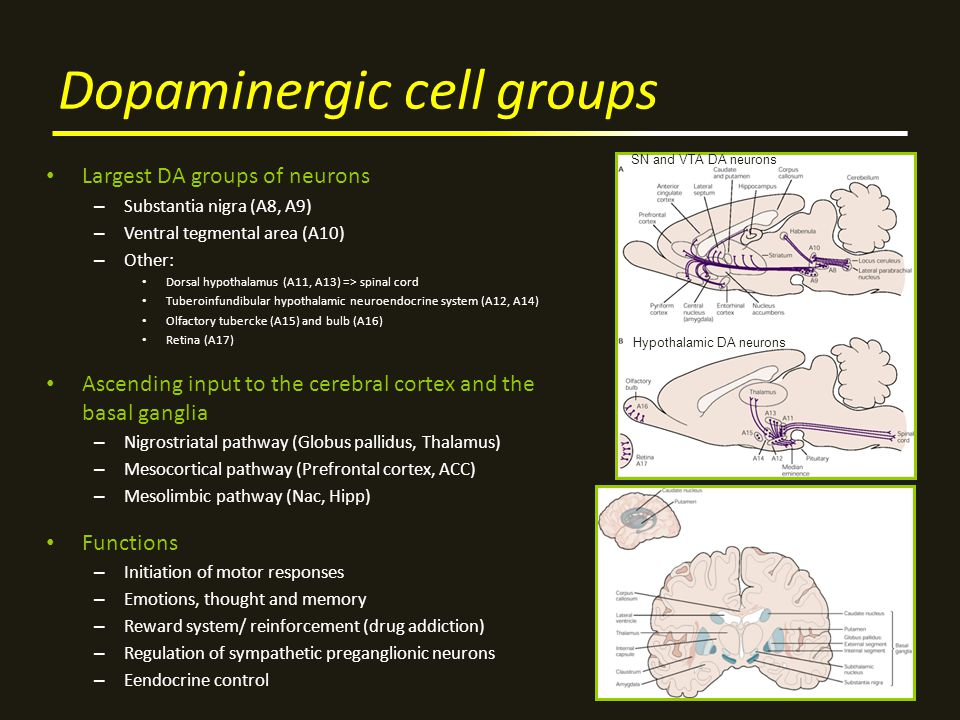 Dopaminergic cell groups