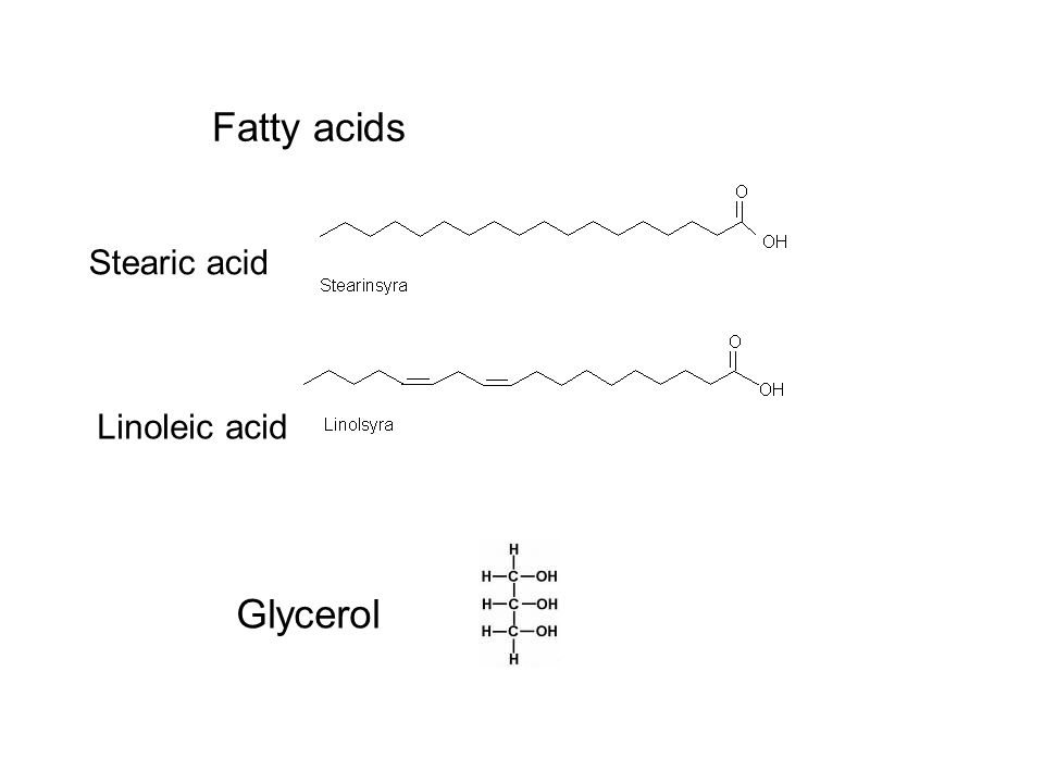 Fatty acids Stearic acid Linoleic acid Glycerol