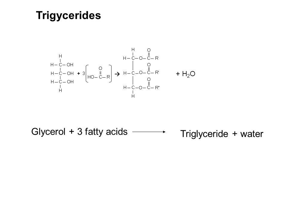 Trigycerides + H2O Glycerol + 3 fatty acids Triglyceride + water