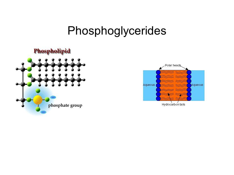 Phosphoglycerides