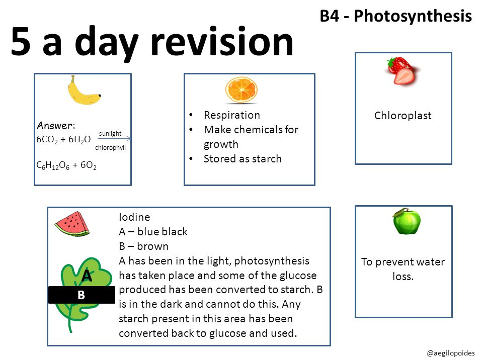 5 a day revision B4 - Photosynthesis A B Chloroplast Respiration