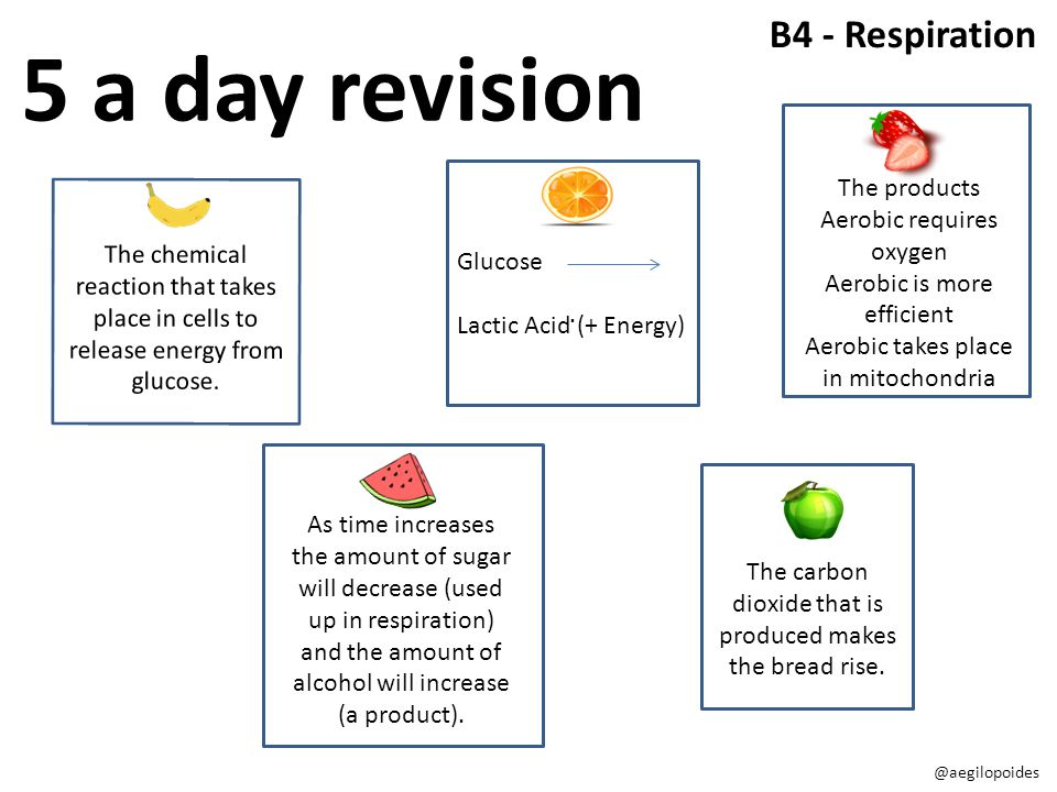 5 a day revision B4 - Respiration The products Aerobic requires oxygen