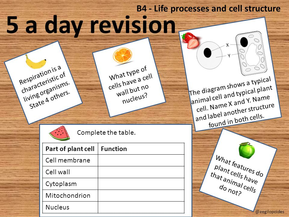5 a day revision B4 - Life processes and cell structure