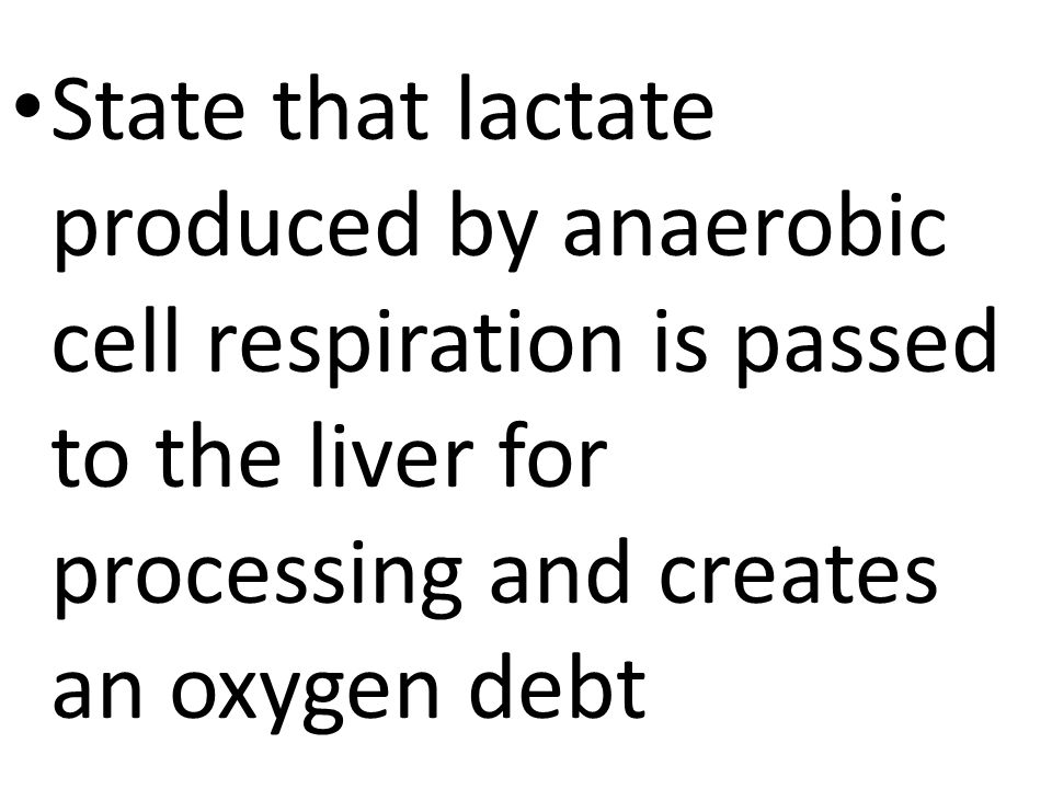 State that lactate produced by anaerobic cell respiration is passed to the liver for processing and creates an oxygen debt