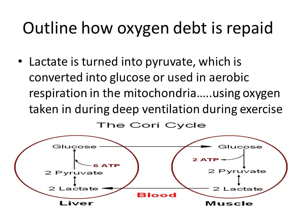 Outline how oxygen debt is repaid
