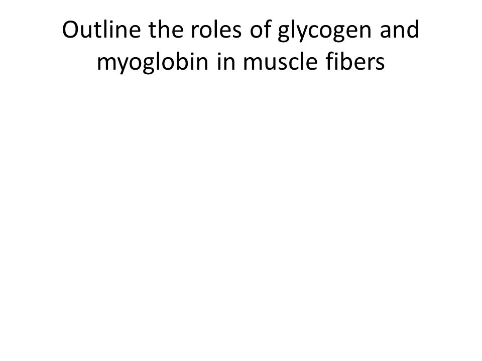 Outline the roles of glycogen and myoglobin in muscle fibers