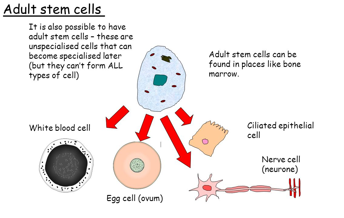 73 places where adult stem cells can be found