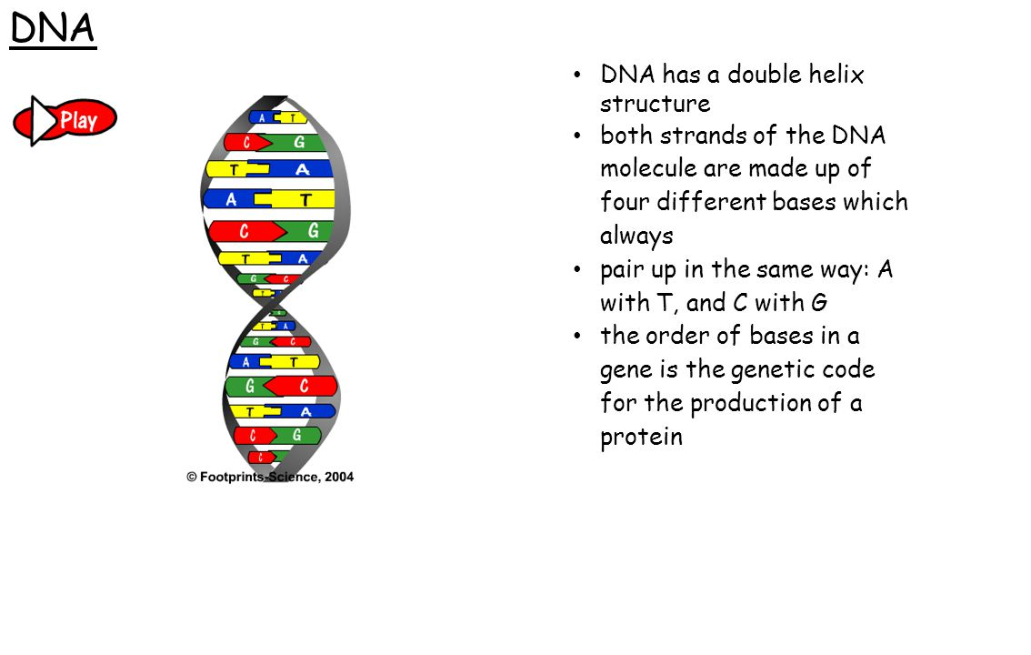 DNA DNA has a double helix structure