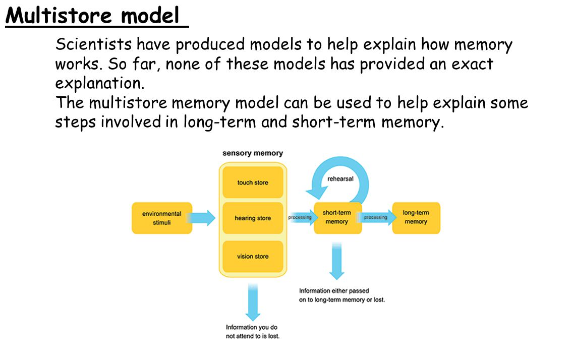 Multistore model Scientists have produced models to help explain how memory works. So far, none of these models has provided an exact explanation.