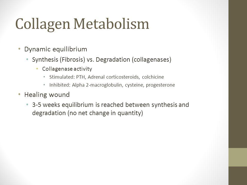 Collagen Metabolism Dynamic equilibrium Healing wound