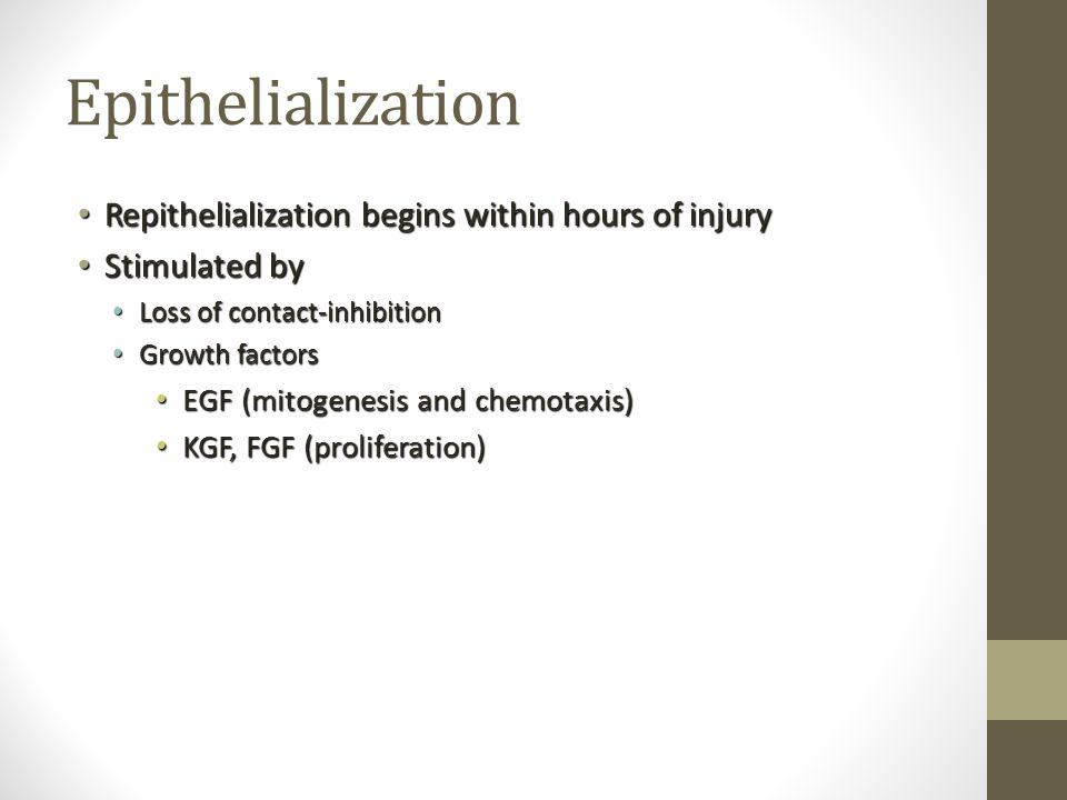 Epithelialization Repithelialization begins within hours of injury