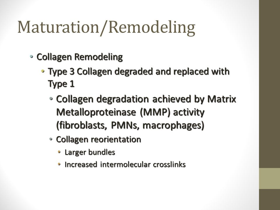 Maturation/Remodeling