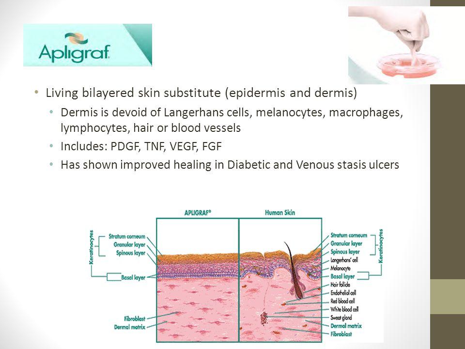 Apligraf Living bilayered skin substitute (epidermis and dermis)