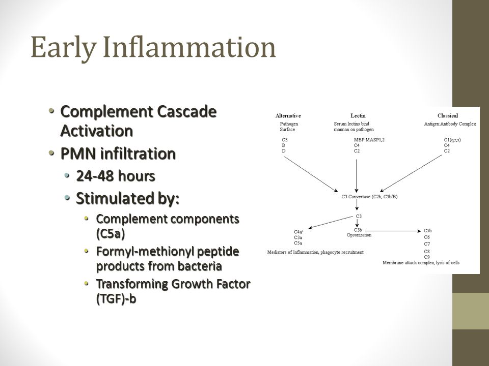 Early Inflammation Complement Cascade Activation PMN infiltration