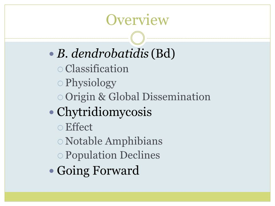 Overview B. dendrobatidis (Bd) Chytridiomycosis Going Forward