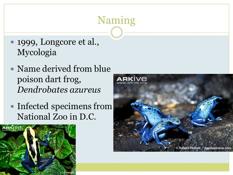 Naming 1999, Longcore et al., Mycologia