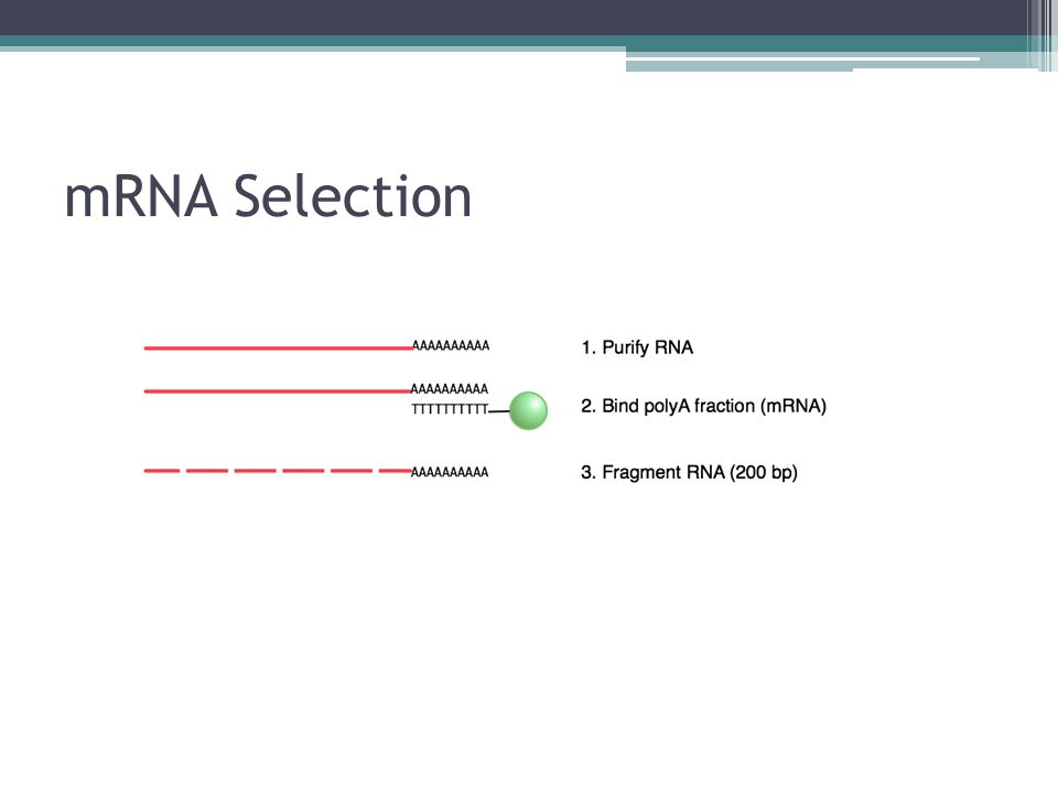 mRNA Selection