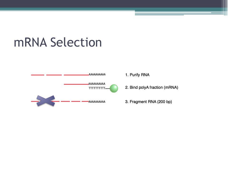 mRNA Selection