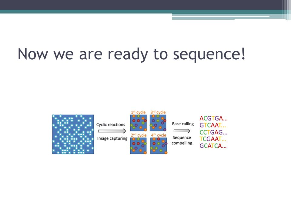 Now we are ready to sequence!